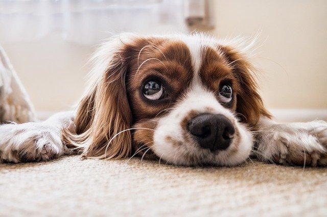Cómo tratar la incontinencia urinaria en nuestras mascotas