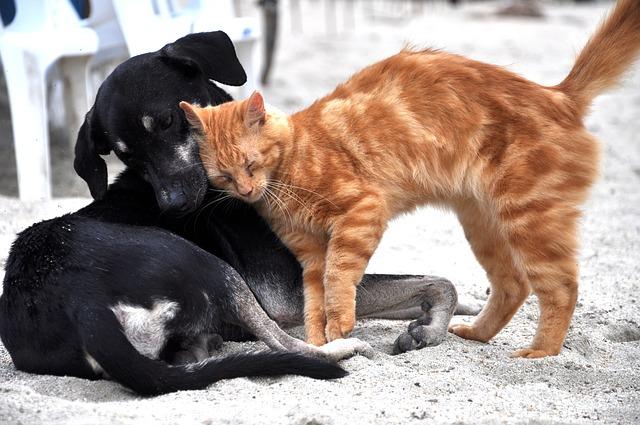 Cómo reconocer una enfermedad neurológica en tu perro o gato