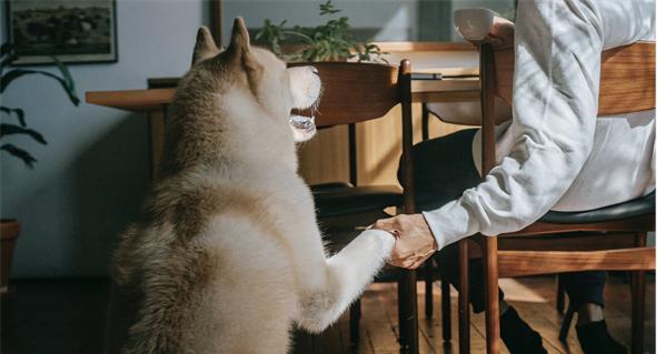 ¿Qué beneficios traen las mascotas para los adultos mayores?