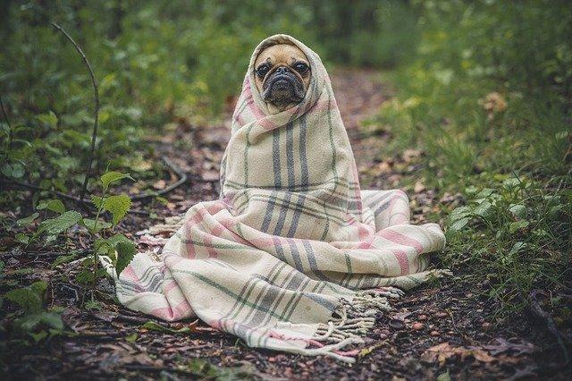 Cuidados que se deben tener en los perros braquicéfalos